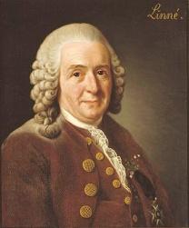 004-Linnaeus.jpg