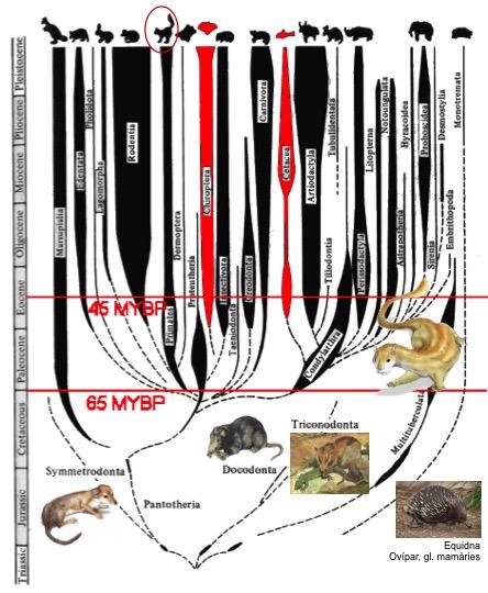 030-mammals.jpg