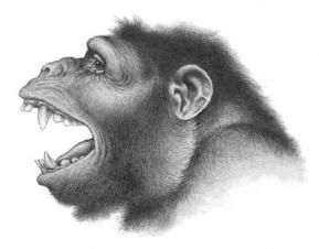 041-Aegyptopithecus.jpg