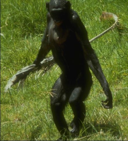 052-bonobo.png