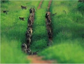 058-babuino.jpg
