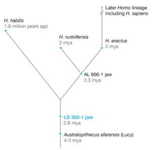 103-Early-Homo.jpg