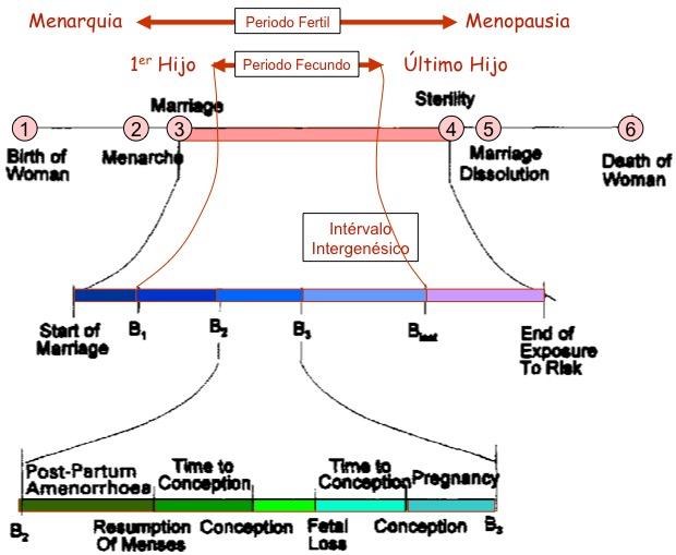 115-intervalo_intergenesico.jpg