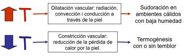 124-termoregulacion.jpg