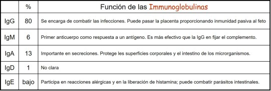 inmunoglobulinas.jpg