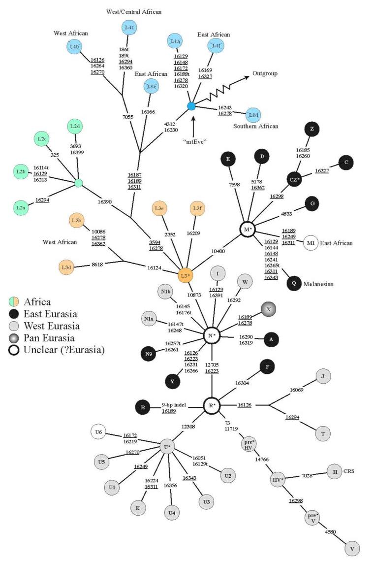 mtDNA-2.jpg