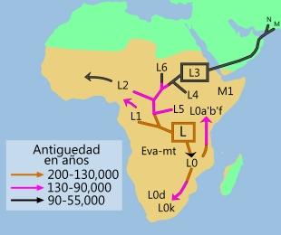 mtDNA-linajes.jpg